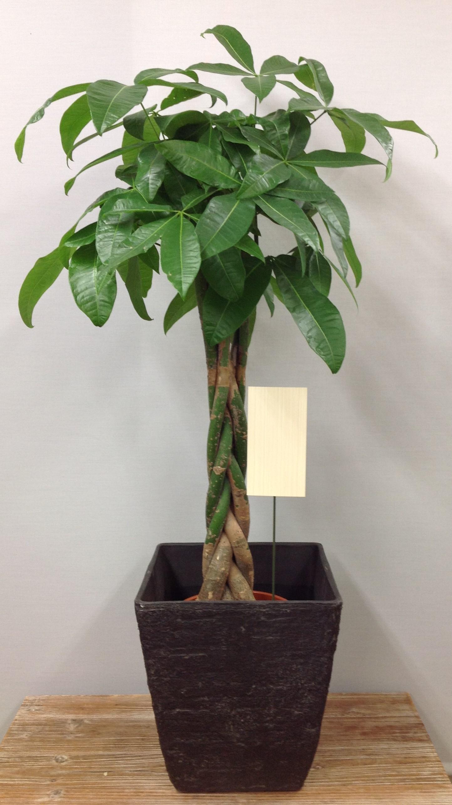 観葉植物*小サイズ